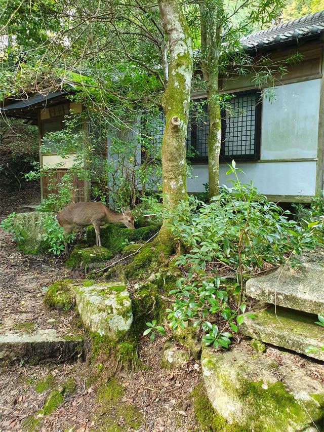 japan2019_hiroshima13
